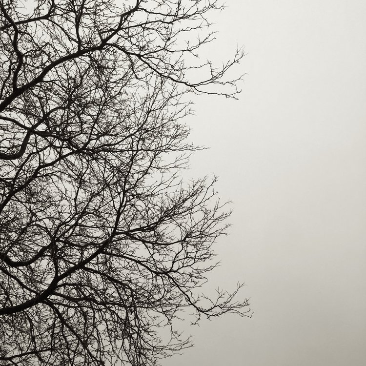 B&W tree without leaves against the neutral sky